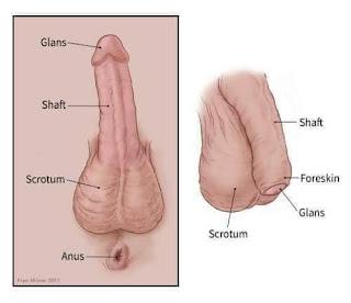 Penis care - www.naijamedialog.com.ng