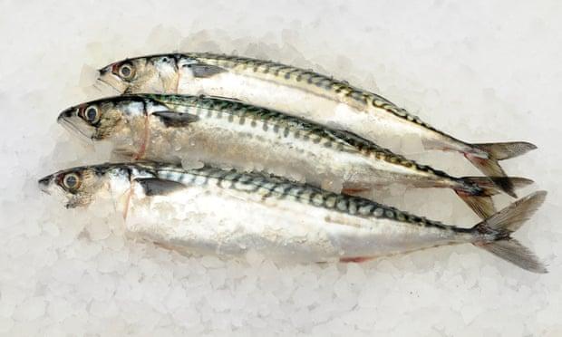 Les poissons gras comme le maquereau sont naturellement riches en vitamine D