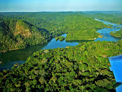 Floresta Amaz%25C3%25B4nica
