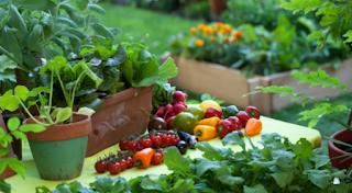 Sayuran Yang Cocok Ditanam Di Pekarangan Rumah