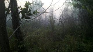 Tipe Hutan di Indonesia