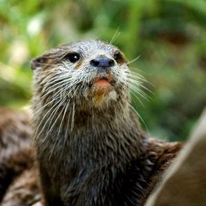 Resultado de imagen para ecosistemas lenticos fauna