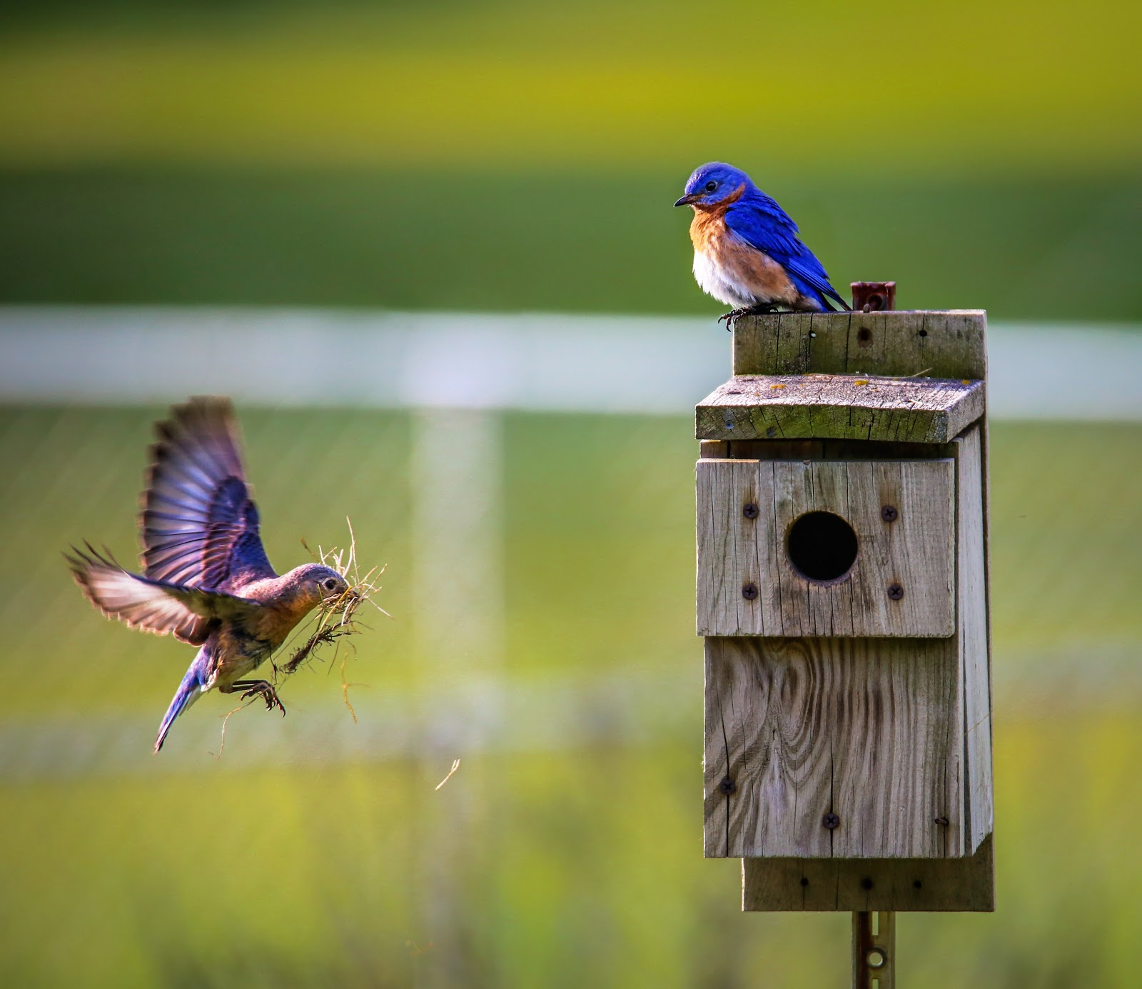 animals-avian-beaks-birdhouse-bird-pictures