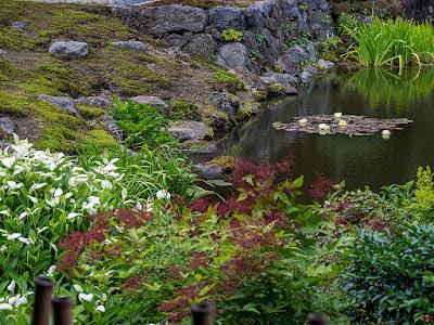 Water lily pond: Kaizo-ji