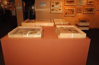 Tapiromorph fossil, Wyoming State Museum