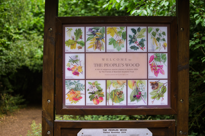 Bearsted Woods, the peoples woods, maidstone