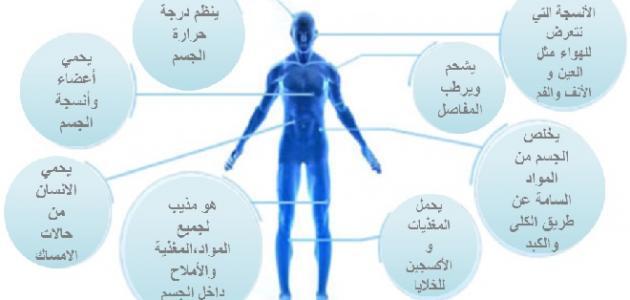 فوائد الماء لجسم الإنسان