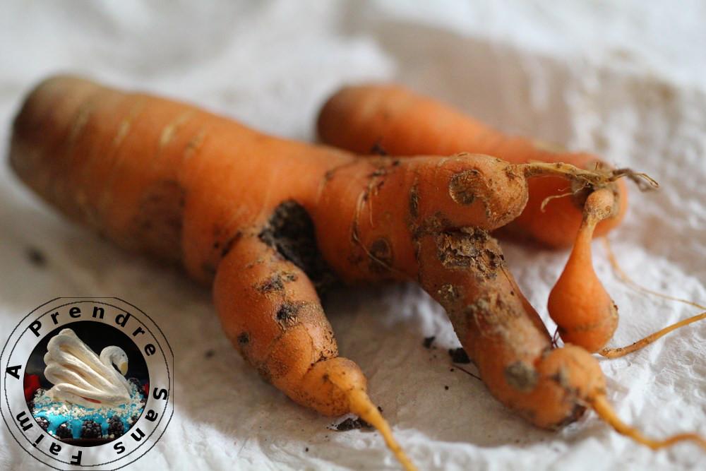 Tout savoir sur les carottes (pas à pas en photos)