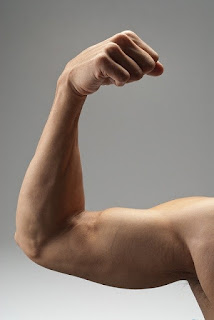 biceps muscles- by  www.learningwayeasy.com