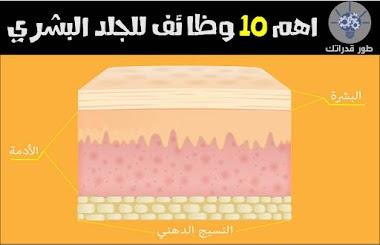اهم 10 وظائف للجلد البشري