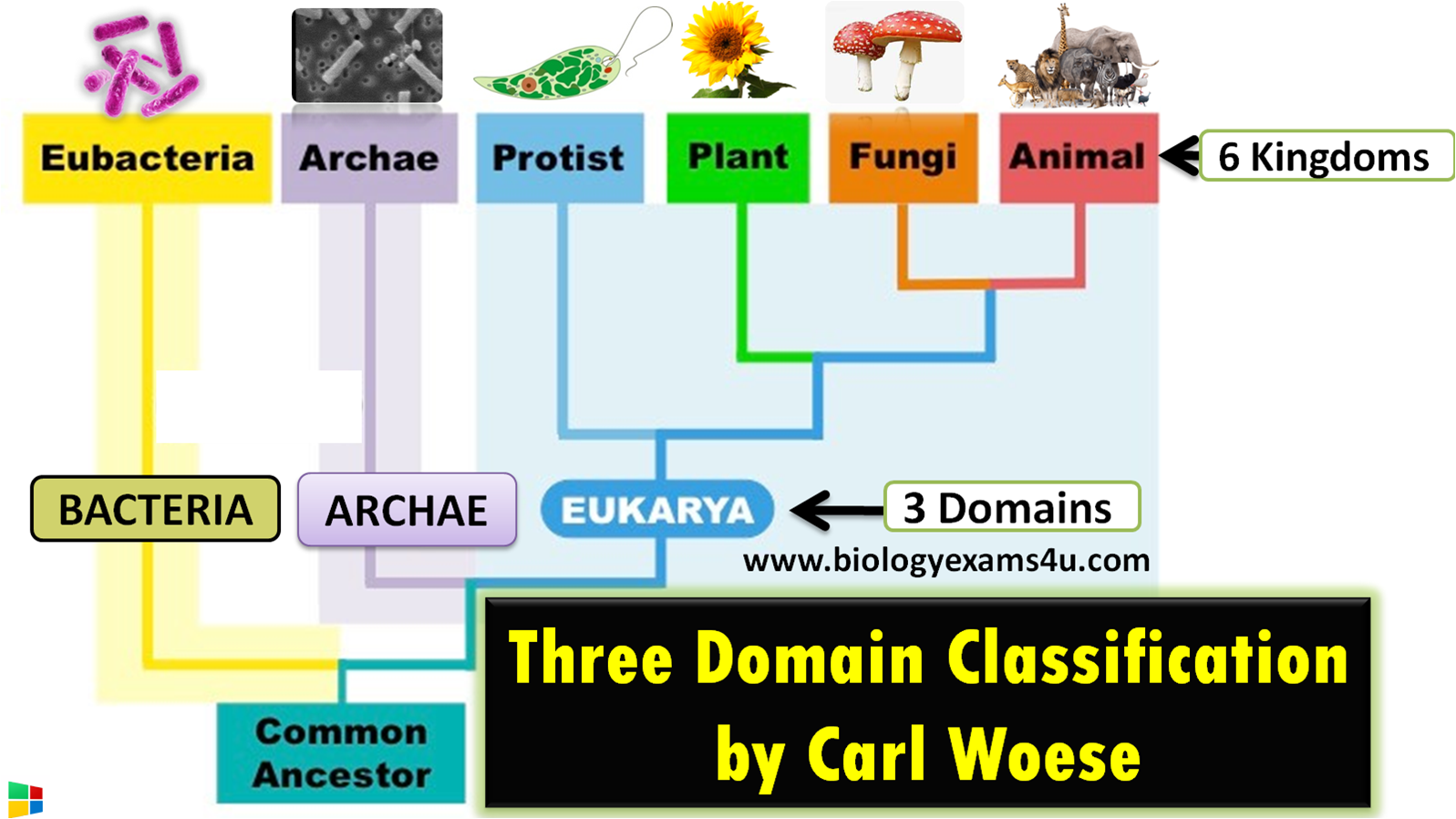 3 domains of life and their characteristics? Three Domain Classification by Carl Woese