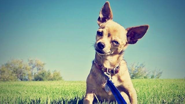 Πώς να αποφύγετε ένα ξένο σκύλο χωρίς λουρί στη βόλτα με τον σκύλο σας;