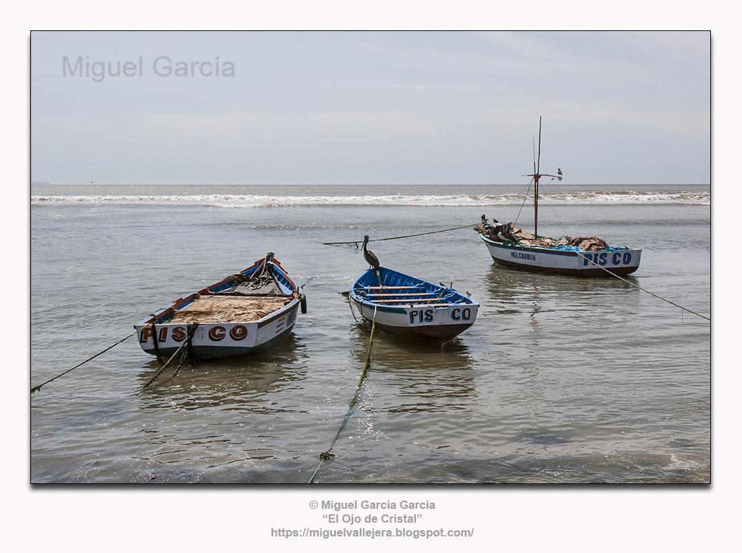 San Andrés (Pisco) - Perú. Pelícano a proa.