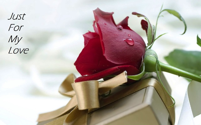 Happy Rose Day 2018 7th Feb Day