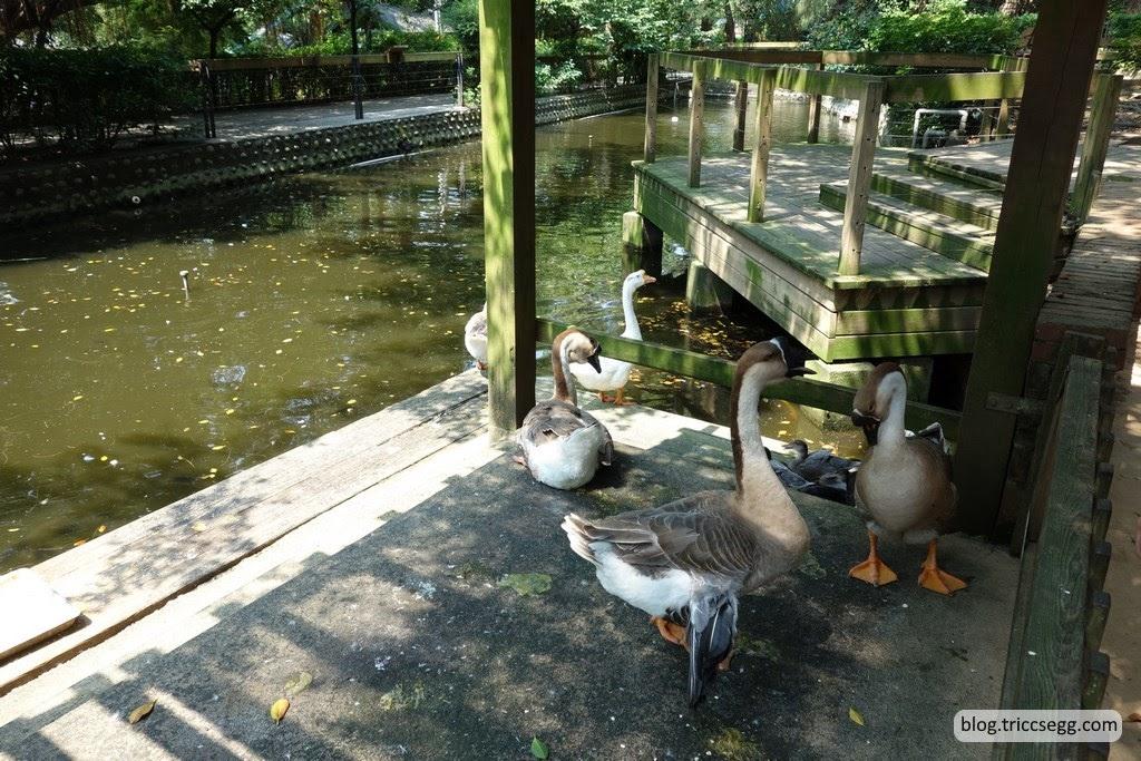 新竹市立動物園(72).JPG