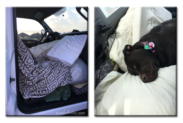 Cab of UHaul piled high with blankets and pillows for Paisley the Labrador