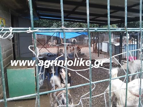 Αποτέλεσμα εικόνας για agriniolike καταφύγιο