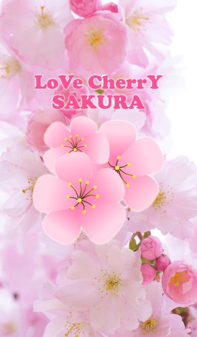 Lovely Pink Sakura Cherry Blossom