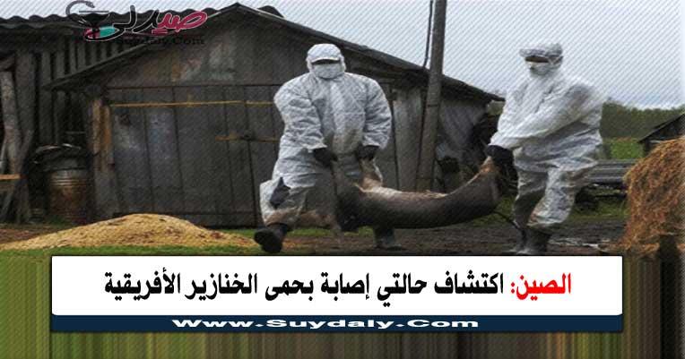الصين تعلن عن حالتى حمى خنازير أفريقية فى إقليمى قانسو وشنشى و12 حالة في كوريا لدي دببة برية