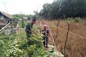 Serka Elpan Yandra Monitoring Sawah Tadah Hujan
