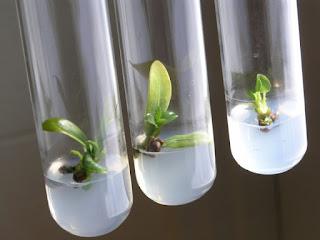 Plant Tissue Culture Trainings in Pune