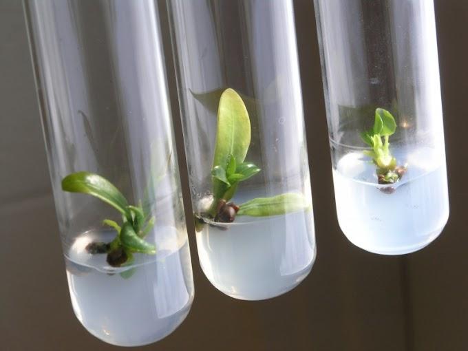 Plant Tissue Culture Internships in Pune | Plant Tissue Culture Trainings in Pune