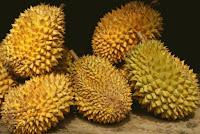 Kontes Durian Unggul Hadir di Festival Bumi Khatulistiwa - Borneo Fan