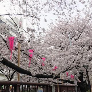 目黒川桜まつりへ!桜と人の多さに田舎者ビビる!!