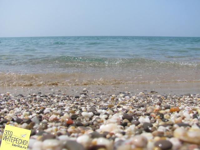 Детям про обитателей Черного моря
