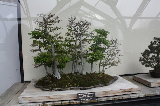 Bonsai creations at Longwood Gardens