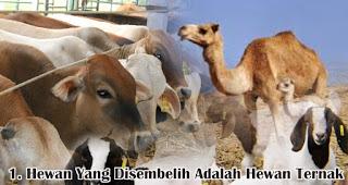 Hewan Yang Disembelih Adalah Hewan Ternak merupakan salah satu kriteria hewan yang dapat disembelih saat Idul Adha