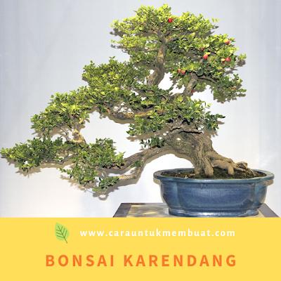Bonsai Karendang / Buah Renda Terbaik