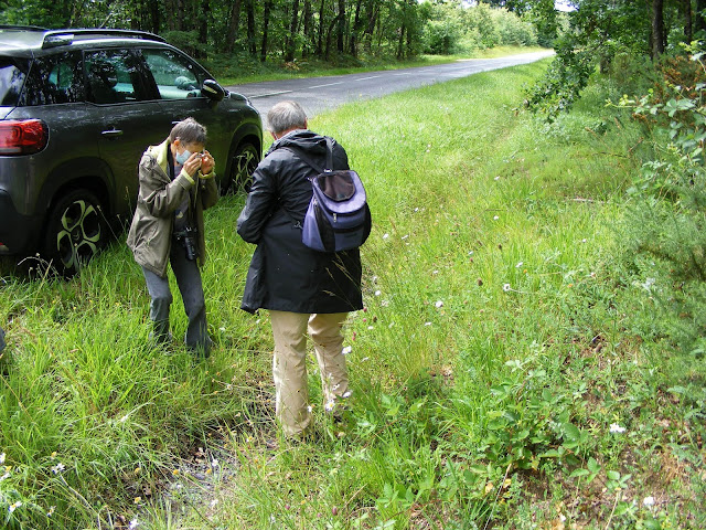 Botanising in a roadside ditch, Indre et Loire, France. Photo by Loire Valley Time Travel.