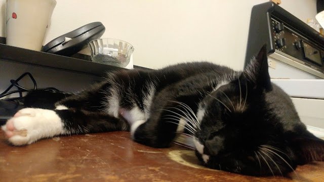A black and white tuxedo cat sleeping on a brown desk.