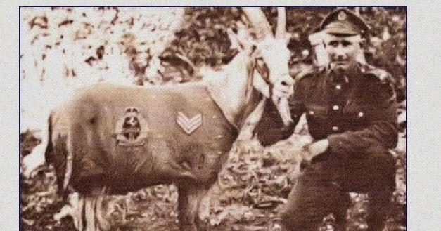 Image result for sgt. bill goat