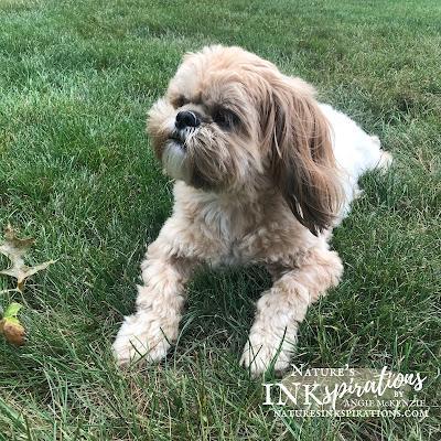 Benji enjoy some of the cool breeze earlier last week!    Weekly Digest #29   Week Ending August 14, 2021   Nature's INKspirations by Angie McKenzie