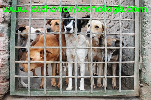 la verdad de los albergues perro asesinados can dog cachorros y tecnologia 2