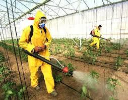 bitki koruma bölümü nedir