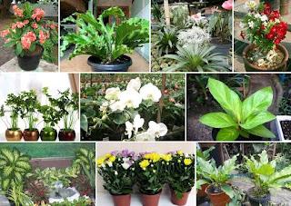 Manfaat Tumbuhan Yang Belum Anda Ketahui