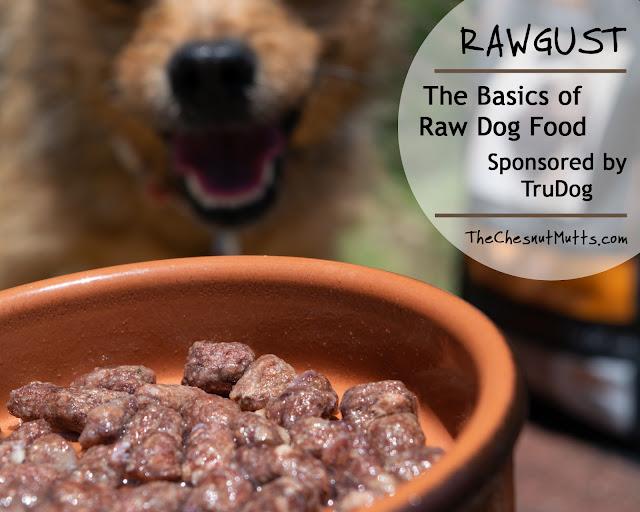 Rawgust: The Basics of Raw Dog Food