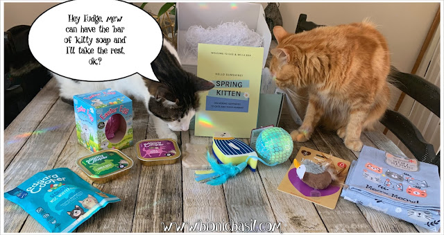 What's In The Box ©BionicBasil® Gus & Bella Spring Kitten Box Melvyn and Fudge