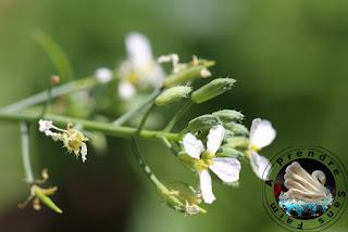 Tout savoir sur les radis (pas à pas en photos)