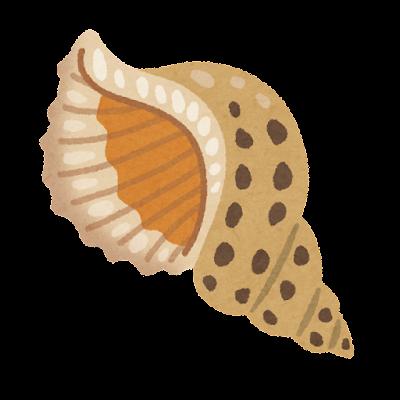 法螺貝のイラスト