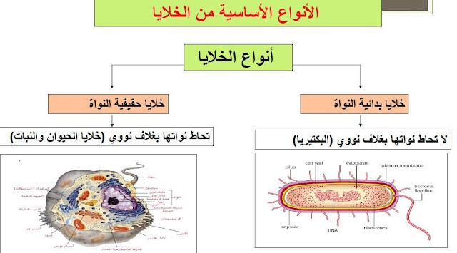 ملخص الدرس الأول الخلية واكتشاف الخلية أحياء