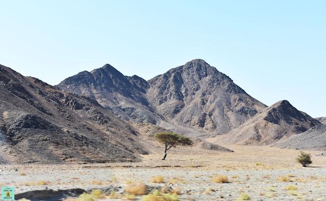 Cómo llegar a Marsa Alam