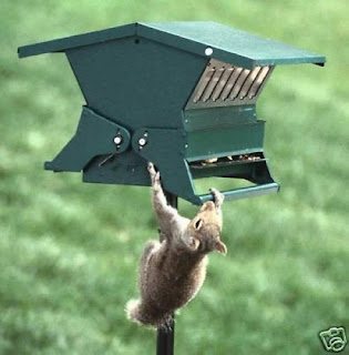 Absolute Anti-Squirrel Proof Feeder