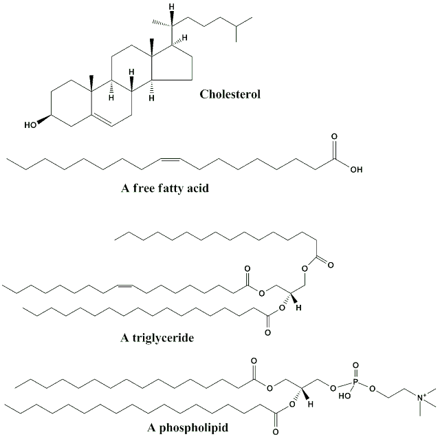 Different Kinds of Lipids