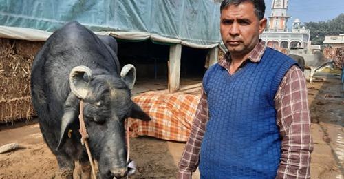 90 लाख रुपया सालाना कमा रहा 'सुल्तान', मालिक ने लगाया 21 करोड़ दाम