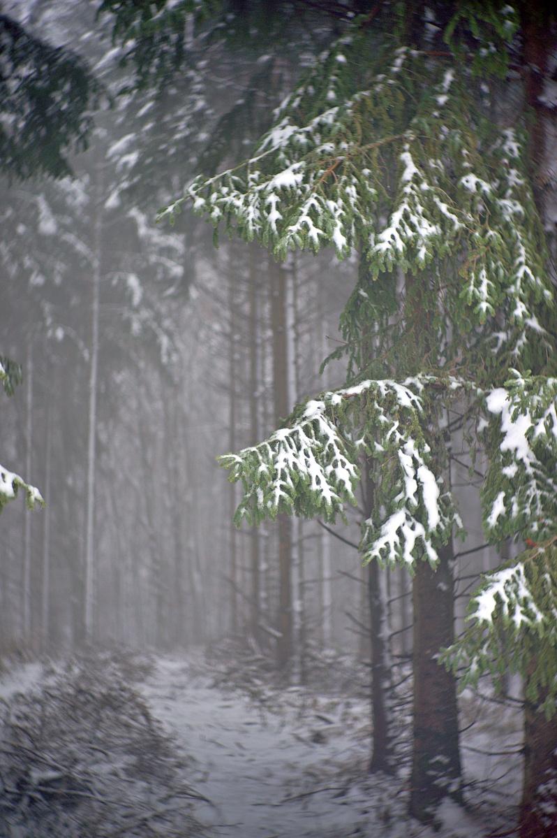 Schnee & Nebel (3)