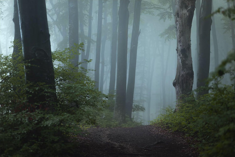 Тропинка в туманном лесу, фотограф Тома Бончиу